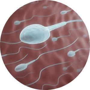 clínica de fertilidad en Gómez Palacio